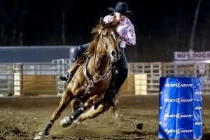 Barrel horse with performance and stamina