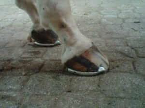 Side Photo of Horse Hoof