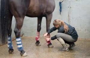 Managing an equine tendon injury