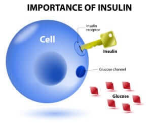 The Metabolic Horse and Insulin