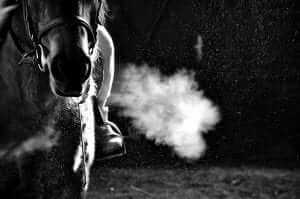 Horse Breath COPD and IAD