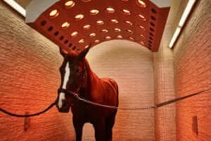 Equine Recovery in the Off Season in Solarium
