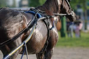 Horse Sweat and Anhidrosis